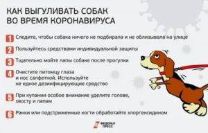 Как мыть собаку: как часто, купать после прогулки, шампунь, мыло, через сколько после прививки