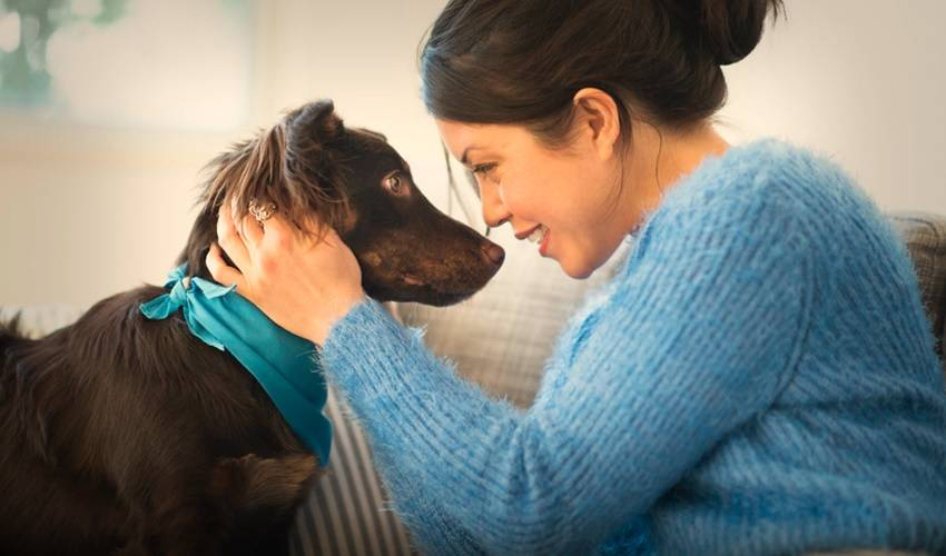 Уход за собакой: общие рекомендации