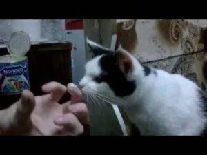 Запор у кошки - причины, симптомы, лечение, профилактика