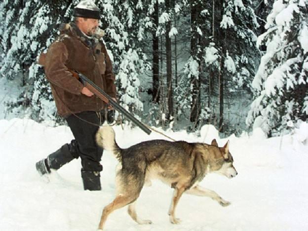 Как выбрать лучшую охотничью собаку: обзор пород