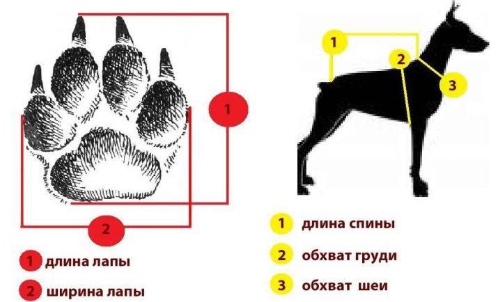 Одежда для больших собак, какая бывает, из чего шьют и как выбрать