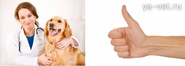 Лечим кашель у собаки в домашних условиях (кашель, хрип и причины)