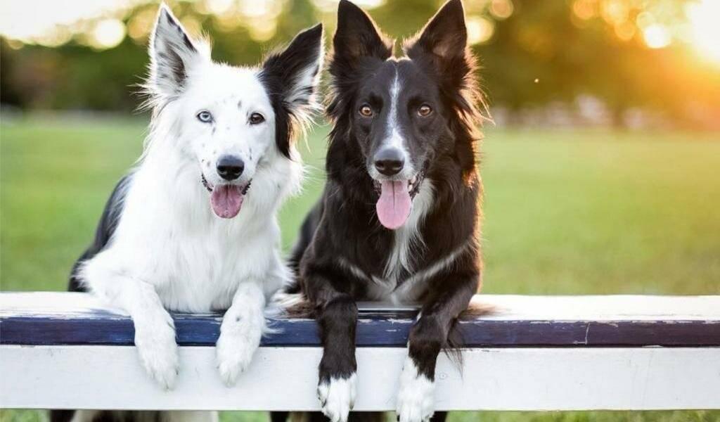 Скай терьер порода собаки, как воспитывать ская