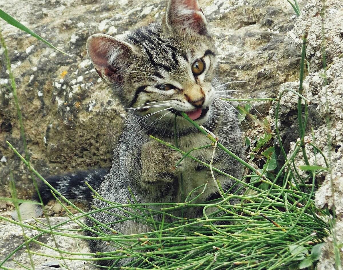 Трава для кошек:  виды, польза, выбор, выращивание