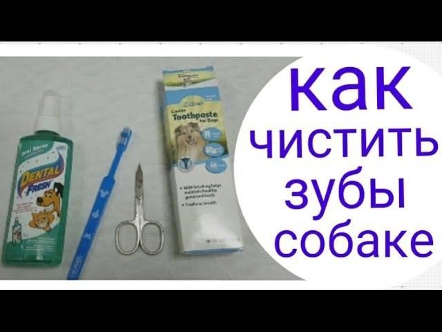 Зубной камень у собак: причины, удаление в домашних условиях и в ветеринарной клинике, чистка под наркозом и без, обзор эффективных средств