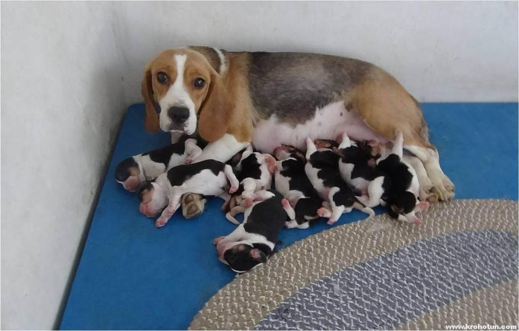 С какого возраста лучше всего покупать щенка: во сколько месяцев брать собаку