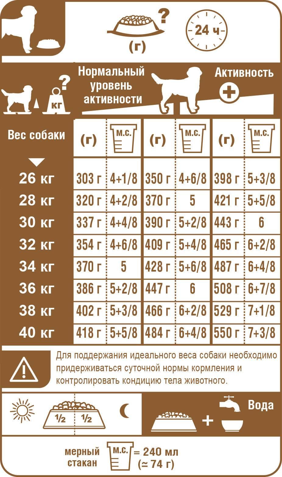 Вес лабрадора по месяцам