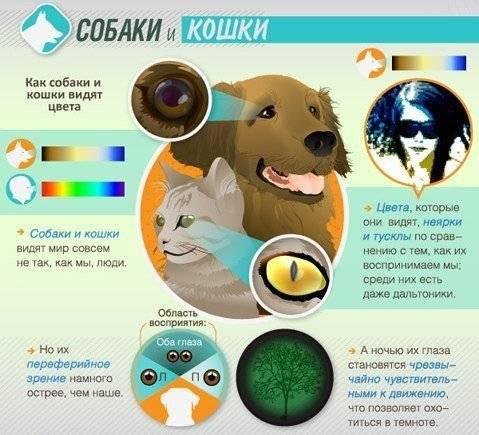 Как видят кошки или особенности кошачьего зрения как видят кошки или особенности кошачьего зрения