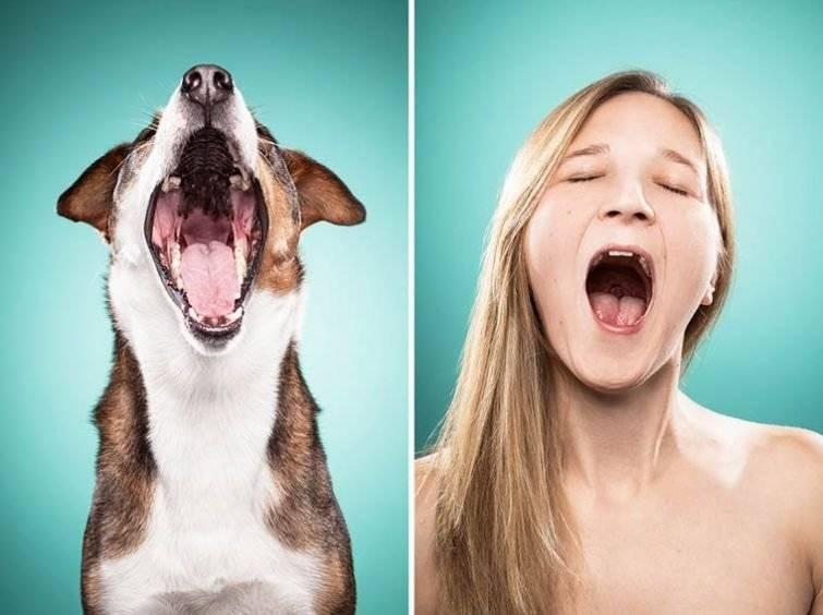 Умеет ли смеяться ваша собака? | для новичков | povodok.by - журнал о собаках
