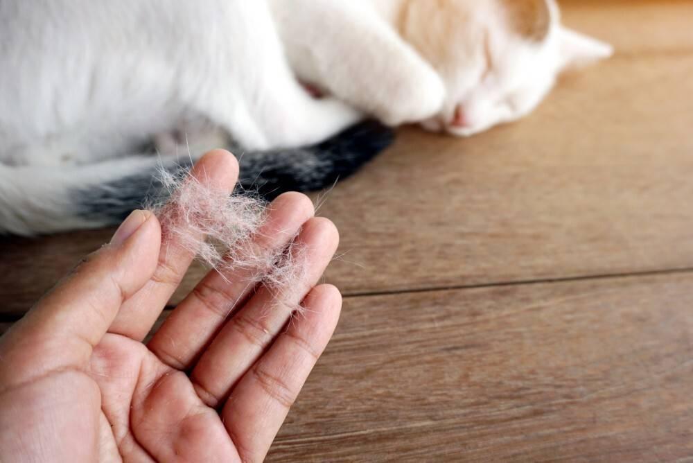 Кошка рвёт шерстью | мои домашние питомцы