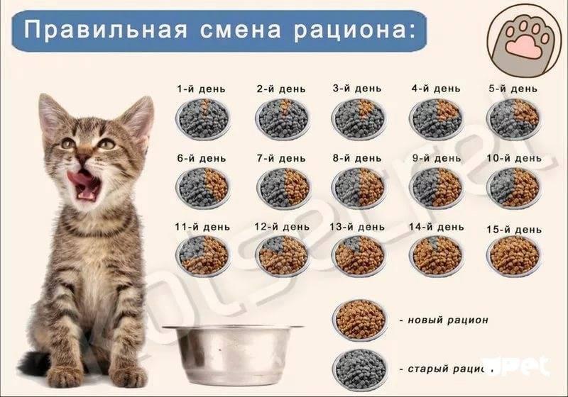 Нормы еды для кошек в сутки