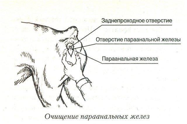 Потеют ли кошки? как не допустить перегрева вашего питомца.