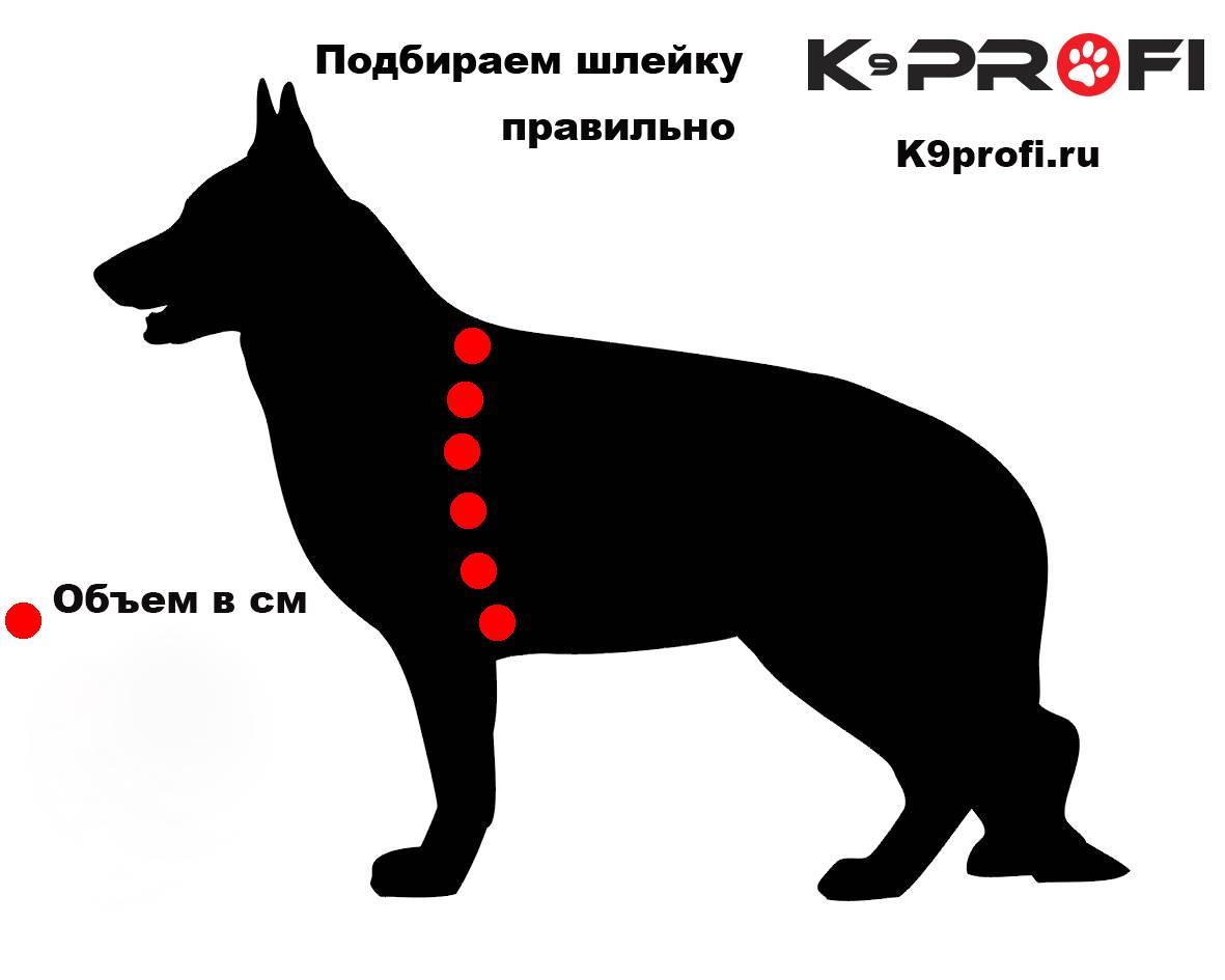 Ринговка для собак: описание и виды, критерии выбора (цвет, материал, размер) + пошаговый мастер-класс изготовления