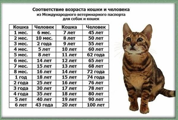 Как определить возраст котенка в домашних условиях, когда кошка становится взрослой?