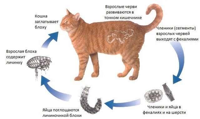 Рвота непереваренным кормом каждый день у кошки: причины и лечение