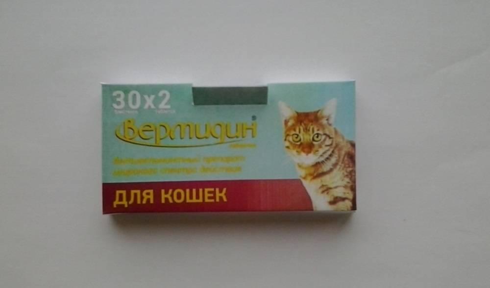Лечение запора у кошки в домашних условиях: слабительное лактусан для котов, описание и дозировка