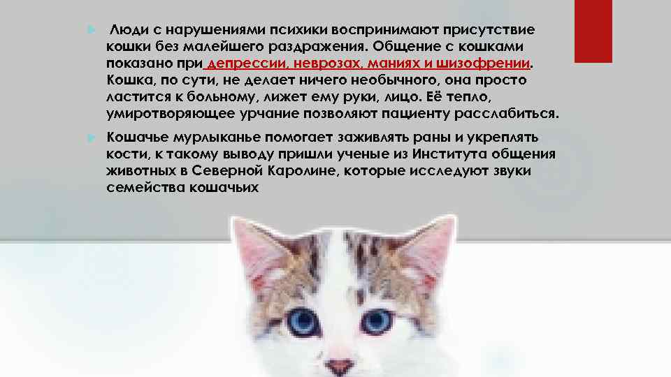 12 признаков того, что кошка признается человеку в любви