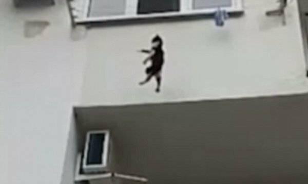 Кот упал с 5 этажа: что делать и как узнать повреждены ли внутренние органы, возможные последствия