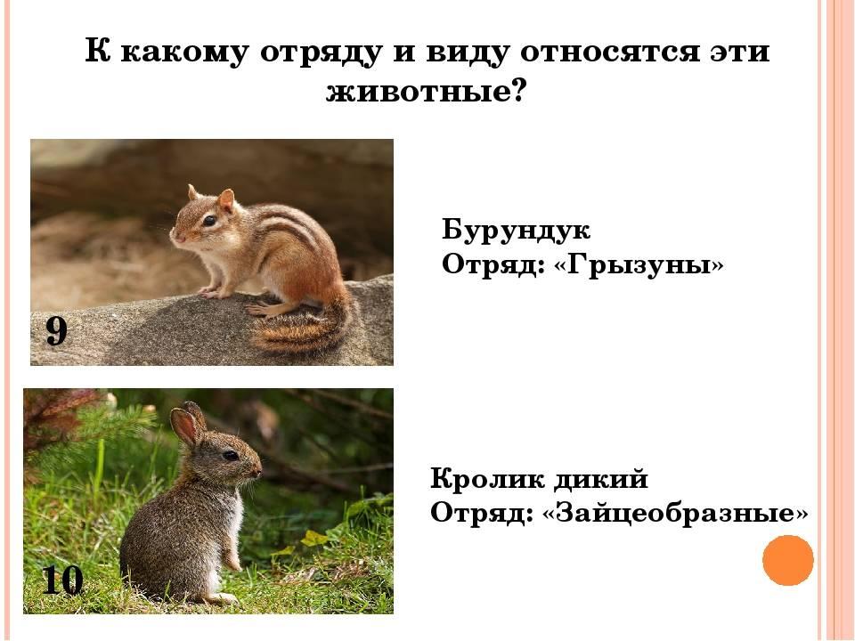 Где живут кролики в дикой природе, что едят дикие кролики