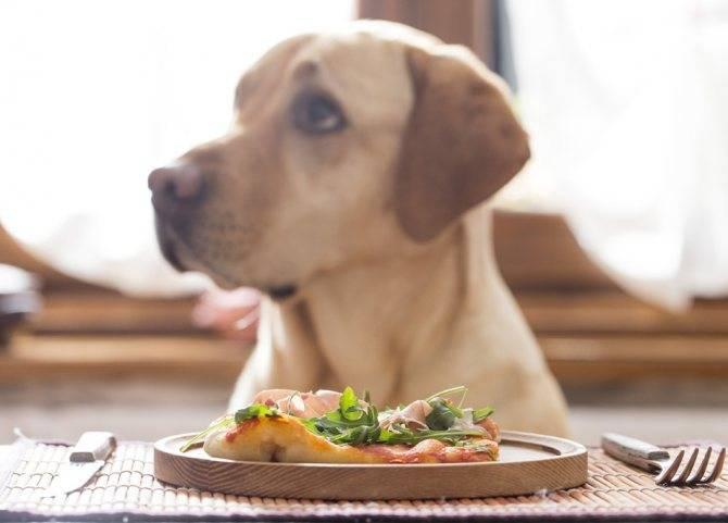Собака вялая и дрожит (озноб и вялость): почему питомца трясет мелкой дрожью и он не ест, отказывается от еды