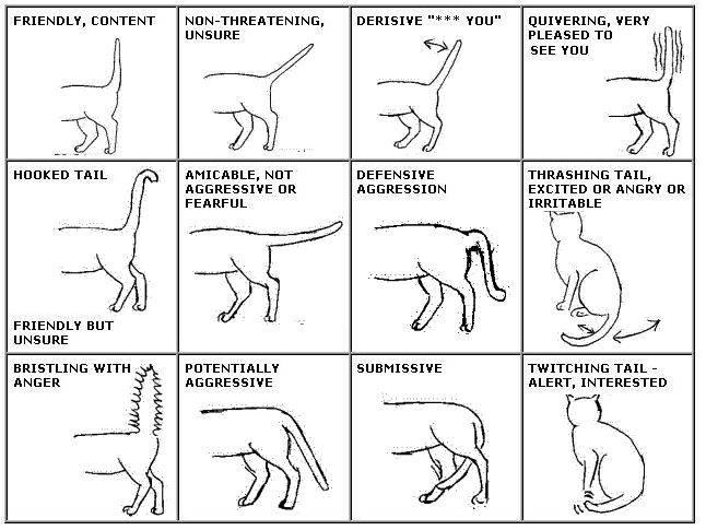 Почему коты и кошки виляют хвостом