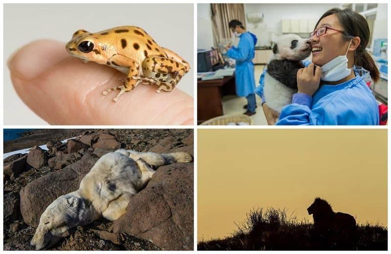 6 самых популярных животных в инстаграм, за которыми интересно наблюдать | world fashion channel