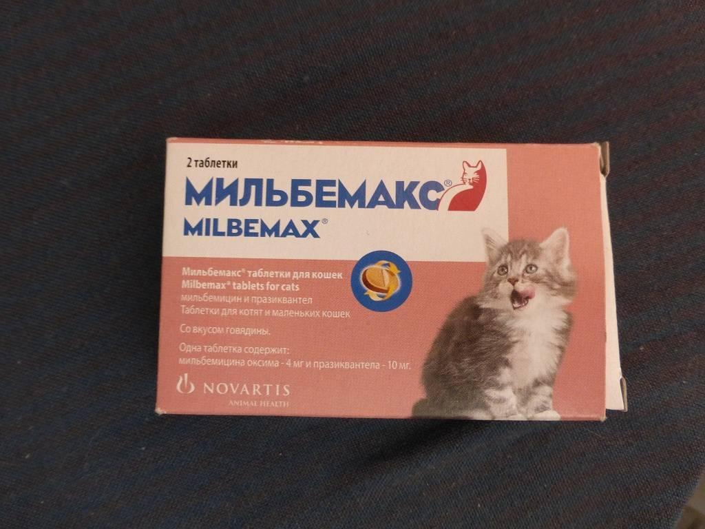 Как применять мильбемакс для кошек: состав препарата, назначение и инструкция по применению, отзывы