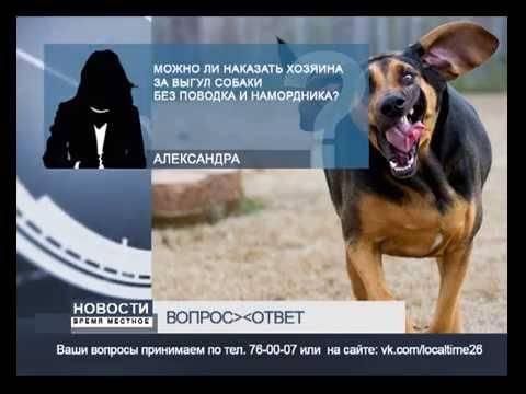 Список собак для выгула в наморднике: поправки в законодательстве, ответственность, куда жаловаться