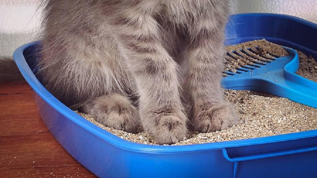 Почему котенок не ест, а только пьет воду?