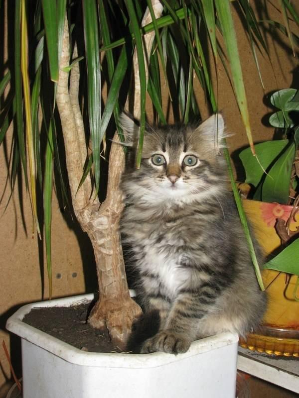Как отучить кота есть комнатные цветы как отучить кота есть комнатные цветы