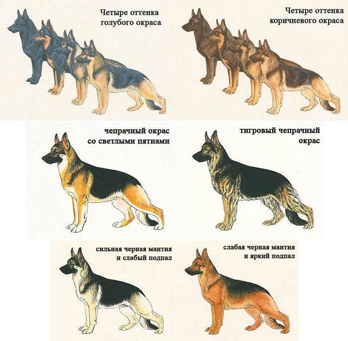 Что значит алиментные щенки