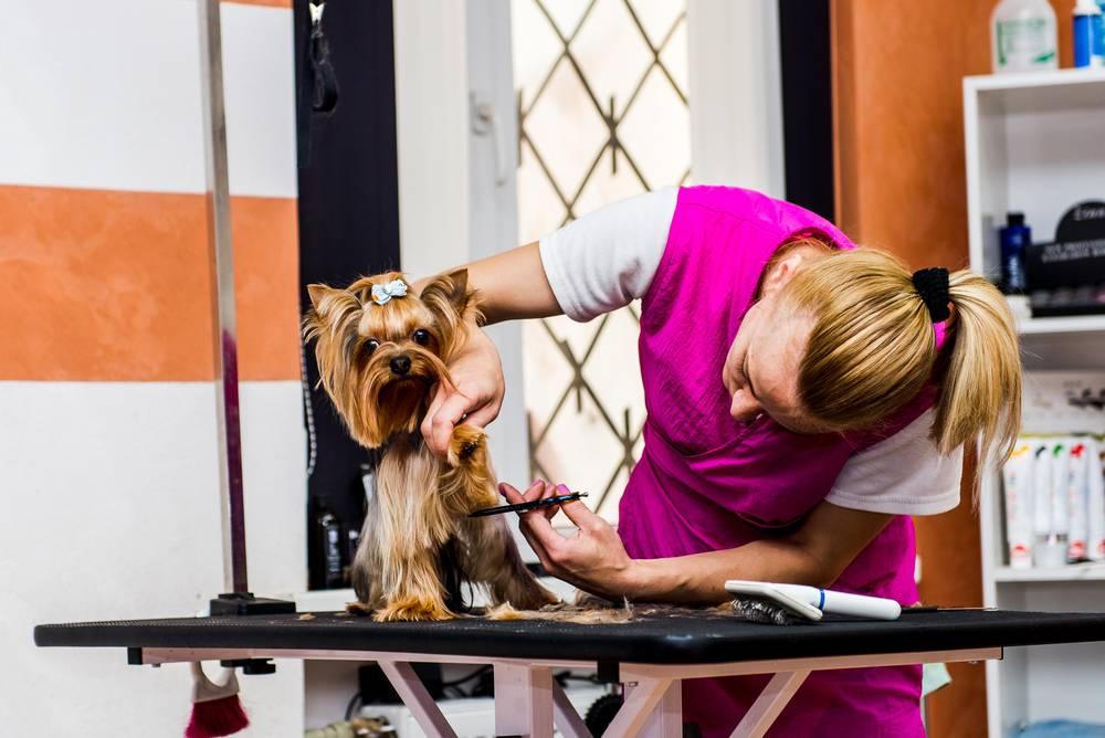 Открываем бизнес — парикмахерская для животных. профессия: как называется парикмахер для собак и кошек