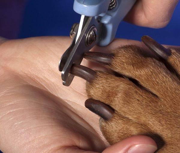Как подстричь черные когти собаке: советы и рекомендации экспертов
