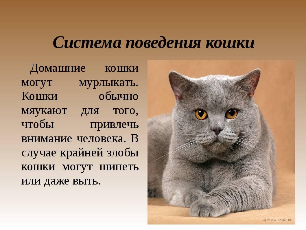 Психология кошек   мои домашние питомцы