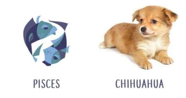 Собаки по знаку зодиака | какая порода подходит вам больше всего?›