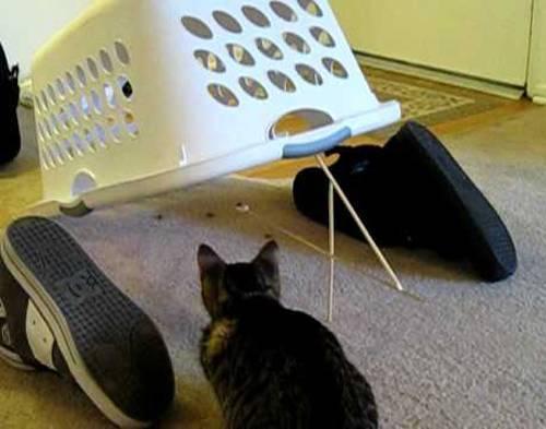 Как поймать кота в ловушку который боится на улице