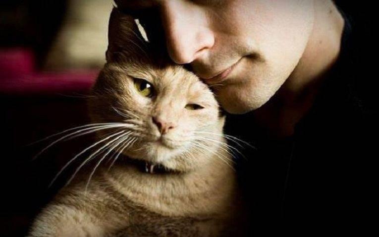 Какая память у кошек