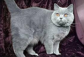У кошки висит живот - о че6м свидетельствует тревожный симптом?