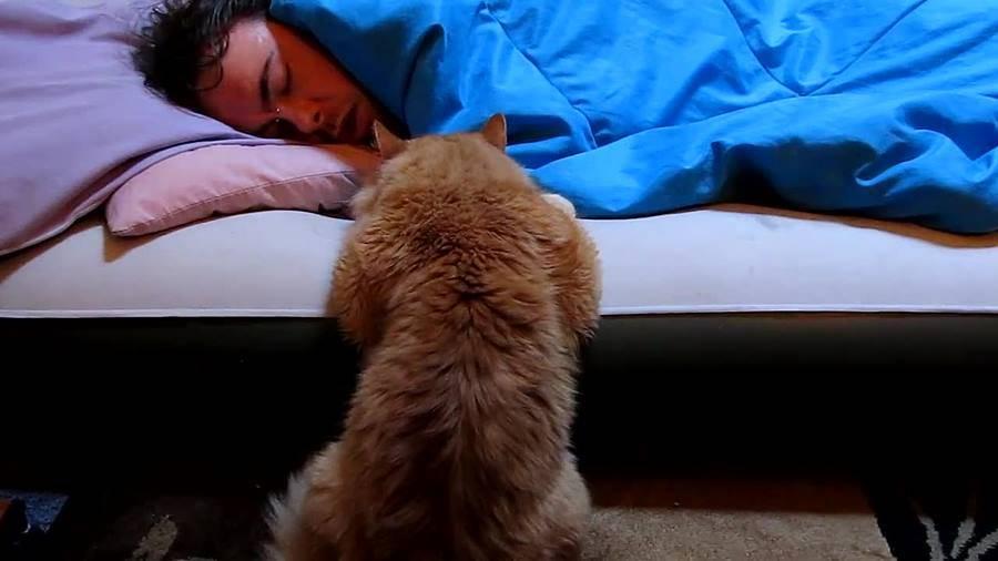 Котик – тёпленький животик: пускать ли пушистого питомца спать с малышом