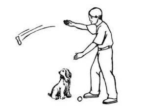 Как научить собаку выдержке (команда «ждать»)