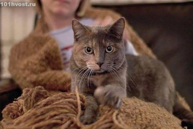 Почему кошки когтями делают массаж