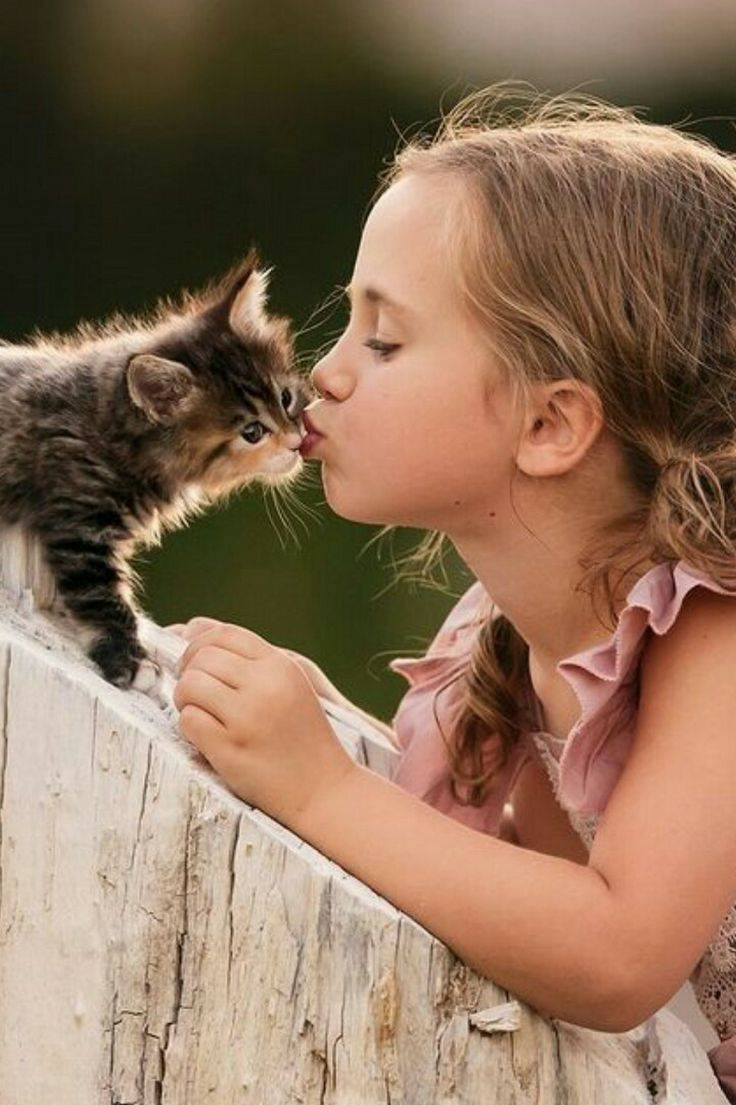 Как правильно воспитывать котенка?