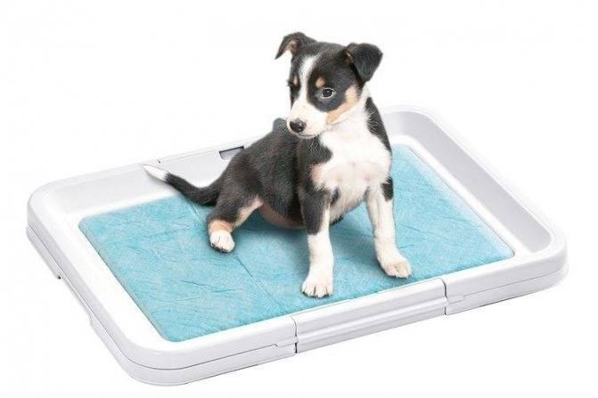 Как приучить щенка к пеленке в 1, 2 или 3 месяца