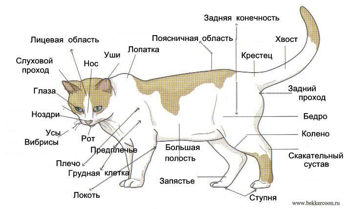 Анатомия и физиология собаки: краткий обзор
