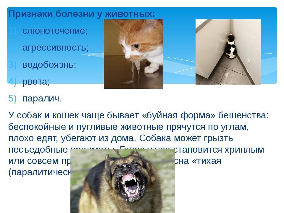 Что делать если укусила кошка