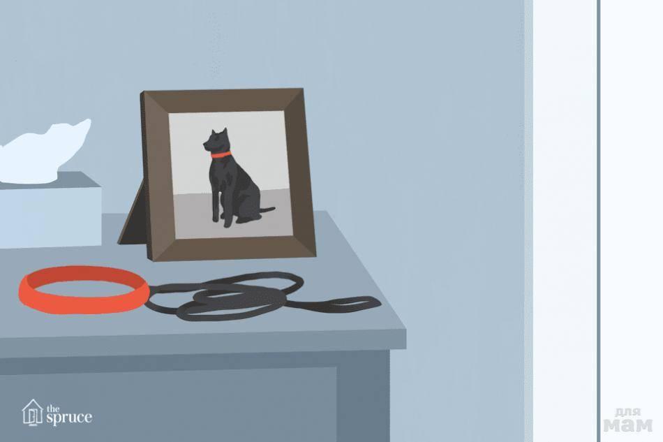 Как пережить смерть питомца - советы психолога. умерла собака - стоит ли заводить другую