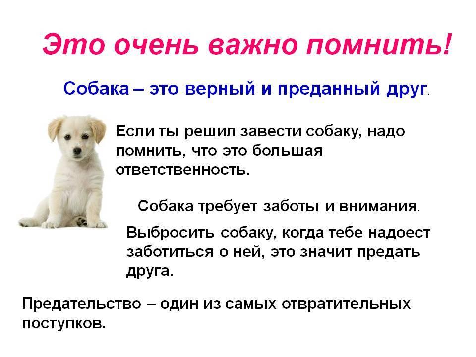Как человеку завоевать доверие и приручить собаку
