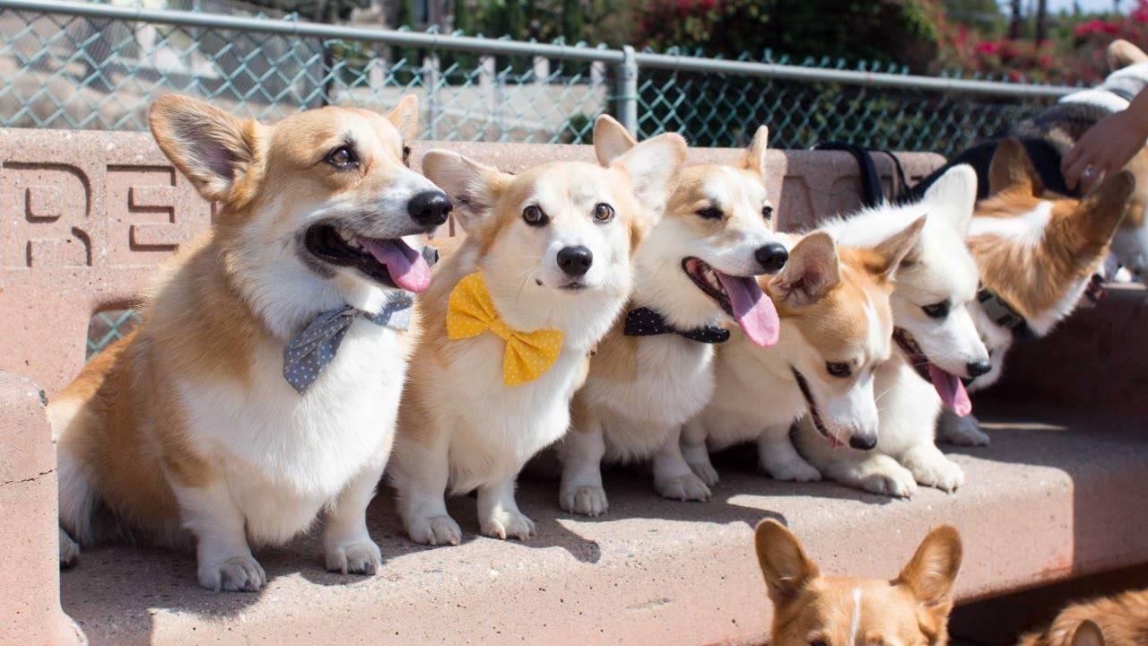 Самые добрые собаки в мире: представители пород с описанием и фото