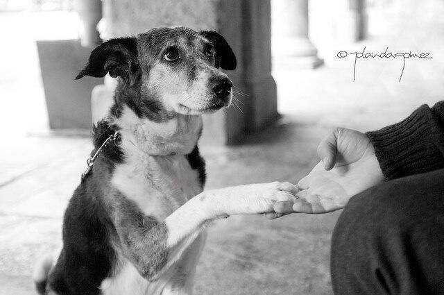 Как помочь бездомным животным: простые способы, доступные каждому