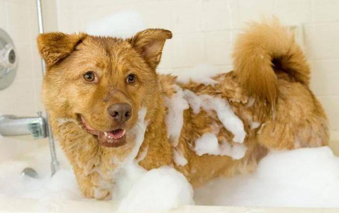 Можно ли мыть собаку человеческим шампунем можно ли мыть собаку человеческим шампунем